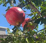 凉山彝族第一美女